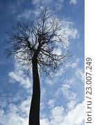 Купить «Дерево на фоне неба», фото № 23007249, снято 13 марта 2011 г. (c) Victoria Demidova / Фотобанк Лори