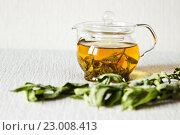 Зелёный чай в стеклянном чайнике и сушёная веточка мяты. Фокусировка на чайнике. Стоковое фото, фотограф Александр Замоткин / Фотобанк Лори