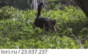 Купить «Кошка, пробирается в траве», видеоролик № 23037237, снято 10 мая 2016 г. (c) Алексей Собченко / Фотобанк Лори