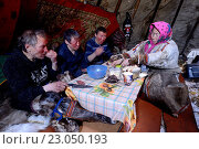 Nenets reindeer herders, men having a meal (bread, raw reindeer meat an tea) served by a woman, inside a reindeer skin tent / Chum, Yar-Sale district, Yamal, Northwest Siberia, Russia. (2016 год). Редакционное фото, фотограф Eric Baccega / age Fotostock / Фотобанк Лори