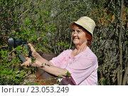 Купить «Пожилая женщина-садовод подрезает электрическим триммером куст жасмина весной в солнечный день», фото № 23053249, снято 8 мая 2016 г. (c) Максим Мицун / Фотобанк Лори