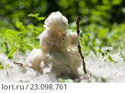Купить «Снеговик из тополиного пуха», фото № 23098761, снято 15 июня 2016 г. (c) Дрогавцева Оксана / Фотобанк Лори