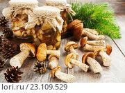 Купить «Соленые грибы в стеклянных банках. Домашнее консервирование», фото № 23109529, снято 17 июня 2016 г. (c) Надежда Мишкова / Фотобанк Лори
