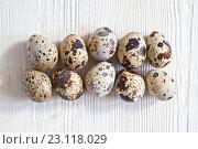 Купить «Перепелиные яйца на светлом деревянном фоне», фото № 23118029, снято 19 июня 2016 г. (c) Юлия Бочкарева / Фотобанк Лори
