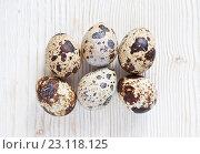 Перепелиные яйца на светлом деревянном фоне. Стоковое фото, фотограф Юлия Бочкарева / Фотобанк Лори