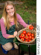 Купить «Portrait of happy gardener looking at fresh tomatoes in basket at garden», фото № 23140257, снято 11 мая 2016 г. (c) Wavebreak Media / Фотобанк Лори