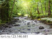 Солнечные лучи пробиваются сквозь листву над горной рекой, фото № 23146681, снято 6 июля 2013 г. (c) Евгений Ткачёв / Фотобанк Лори