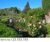 Купить «Люди на прогулке в парке Дендрарий, цветущие розы, пальмы, зеленые деревья и кустарник», фото № 23153193, снято 9 мая 2016 г. (c) DiS / Фотобанк Лори