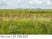 Купить «Степь в начале лета», фото № 23165633, снято 12 июня 2016 г. (c) Борис Панасюк / Фотобанк Лори