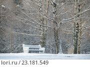 Купить «Скамья покрыта снегом в зимнем парке», фото № 23181549, снято 8 января 2016 г. (c) Pukhov K / Фотобанк Лори