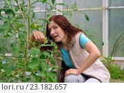 Купить «Девушка - садовод держит ветку с маленькими зелеными помидорами в теплице на дачном участке», фото № 23182657, снято 19 июня 2016 г. (c) Максим Мицун / Фотобанк Лори