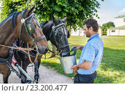 Купить «Извозчик поит лошадей из ведра», фото № 23200477, снято 1 июля 2016 г. (c) Алёшина Оксана / Фотобанк Лори