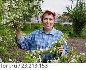 Пенсионерка стоит возле цветущей яблони на дачном участке. Стоковое фото, фотограф Вячеслав Палес / Фотобанк Лори