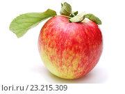 Красно-желтое яблоко с зелеными листьями на белом фоне. Стоковое фото, фотограф Алексей C. / Фотобанк Лори