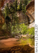 Hiking to the Subway at Zion National Park, Utah, United States of America, North America. Стоковое фото, фотограф Garry Ridsdale / age Fotostock / Фотобанк Лори