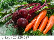 Купить «Морковь и свекла с ботвой на деревянном столе. Овощи с огорода», фото № 23226597, снято 8 июля 2016 г. (c) Виктория Панченко / Фотобанк Лори