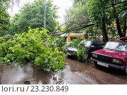 Купить «Падение дерева на припаркованные автомобили во дворе жилого дома во время грозы», фото № 23230849, снято 3 июля 2016 г. (c) Сайганов Александр / Фотобанк Лори