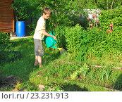 Подросток поливает грядку (2016 год). Редакционное фото, фотограф Инесса Гаварс / Фотобанк Лори