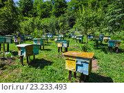 Купить «Пасека в предгорьях Кавказа», фото № 23233493, снято 27 июня 2016 г. (c) Олег Жуков / Фотобанк Лори