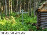 Купить «Святой источник святителя Николая в зарослях леса», фото № 23246257, снято 4 июля 2016 г. (c) Валерий Смирнов / Фотобанк Лори