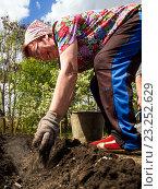 Купить «Пожилая женщина - садовод вносит золу в землю при посадке картофеля», эксклюзивное фото № 23252629, снято 5 мая 2016 г. (c) Вячеслав Палес / Фотобанк Лори