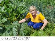 Купить «Пожилая женщина на огороде с кабачками», эксклюзивное фото № 23258197, снято 10 июля 2016 г. (c) Елена Коромыслова / Фотобанк Лори
