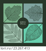Купить «Рамка из листьев», иллюстрация № 23267413 (c) Шильникова Дарья / Фотобанк Лори