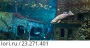 Подводный мир. Стоковое фото, фотограф Владислав Полушкин / Фотобанк Лори