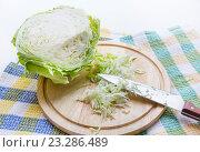 Купить «Нашинкованная капуста», фото № 23286489, снято 19 июля 2016 г. (c) Дудакова / Фотобанк Лори