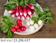 Купить «Bundle of fresh organic radishes with leaves on a rustic table.», фото № 23286637, снято 8 мая 2016 г. (c) Tatjana Baibakova / Фотобанк Лори