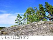 Молодые сосны на скалистом острове в ладожских шхерах (2016 год). Редакционное фото, фотограф Владимир Кошарев / Фотобанк Лори
