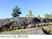 Скалистый склон небольшого острова в ладожских шхерах (2016 год). Редакционное фото, фотограф Владимир Кошарев / Фотобанк Лори