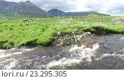 Купить «view to river and hills at connemara in ireland 33», видеоролик № 23295305, снято 23 июня 2016 г. (c) Syda Productions / Фотобанк Лори