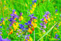 Цветущий марьянник дубравный, фото № 23302925, снято 15 июля 2016 г. (c) Зезелина Марина / Фотобанк Лори