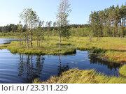 Купить «Лесное озеро», фото № 23311229, снято 27 июля 2014 г. (c) Азаркевич Андрей / Фотобанк Лори
