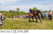 Купить «Девочка казачка скачет на лошади», фото № 23314245, снято 18 июня 2016 г. (c) Акиньшин Владимир / Фотобанк Лори