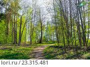 Купить «Тропинка в весеннем лесу», фото № 23315481, снято 5 мая 2016 г. (c) Зезелина Марина / Фотобанк Лори