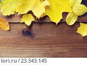 Купить «close up of many different fallen autumn leaves», фото № 23343145, снято 19 октября 2015 г. (c) Syda Productions / Фотобанк Лори