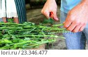 Купить «Mid section of florist cutting stem», видеоролик № 23346477, снято 22 ноября 2017 г. (c) Wavebreak Media / Фотобанк Лори