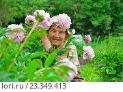 Купить «Пожилая женщина садовод улыбается в кустах розовых пионов», фото № 23349413, снято 27 июня 2016 г. (c) Максим Мицун / Фотобанк Лори