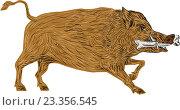 Купить «Кабан», иллюстрация № 23356545 (c) Aloysius Patrimonio / Фотобанк Лори
