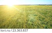 Купить «Низкий полет над зеленым и желтым пшеничным полем», видеоролик № 23363837, снято 15 марта 2016 г. (c) Александр Маркин / Фотобанк Лори