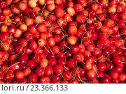 Купить «Фон из спелой вишни», фото № 23366133, снято 16 июля 2016 г. (c) Литвяк Игорь / Фотобанк Лори