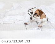 Купить «Собака читает книгу», фото № 23391393, снято 2 июля 2016 г. (c) Гладских Татьяна / Фотобанк Лори