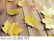 Купить «close up of many different fallen autumn leaves», фото № 23403197, снято 19 октября 2015 г. (c) Syda Productions / Фотобанк Лори