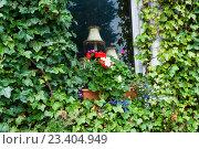 Купить «Окно заросшее зеленым плющом», фото № 23404949, снято 9 сентября 2015 г. (c) Татьяна Кахилл / Фотобанк Лори