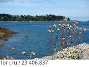 Сухие цветы на морском скалистом берегу. Стоковое фото, фотограф Stjarna / Фотобанк Лори