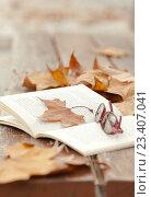 Купить «Листья клена и открытая книга», фото № 23407041, снято 24 ноября 2014 г. (c) Дарья Филимонова / Фотобанк Лори