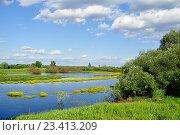 Купить «Весенний водный пейзаж - маленькая река Веряжа, заросшая желтыми цветами», фото № 23413209, снято 7 июня 2016 г. (c) Зезелина Марина / Фотобанк Лори