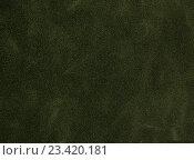 Купить «Зеленая тёмная кожа», фото № 23420181, снято 29 июня 2016 г. (c) Максим Стриганов / Фотобанк Лори